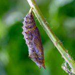 Larva, primer estado de algunos insectos